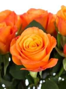 Rosen Confidental orange