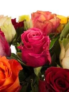 Rosen Pracht Mischung