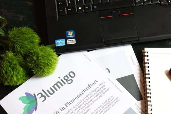 Aufbau eines Blumen Online-Shops_grüne Baartnelken_Blumigo