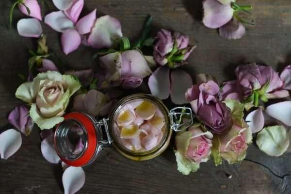 DIY Rosenpeeling Rosen lila rosa violett_