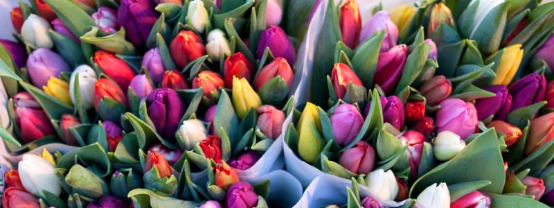 Bunte Tulpen gemischt kaufen auf dem Wochenmarkt Wiedenbrück