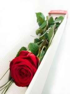 Rote Rose als Valentinsgeschenk Red Naomi mit Grün Bärgras in Geschenkkarton