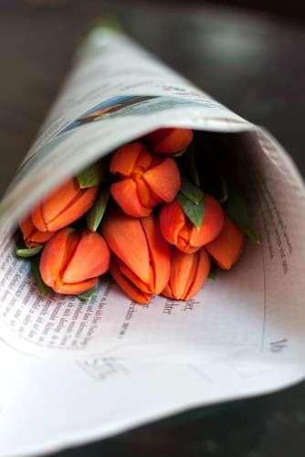 Tulpen in Zeitungspapier_Tulpen Pflege_Tulpen schlapp_hängende Köpfe