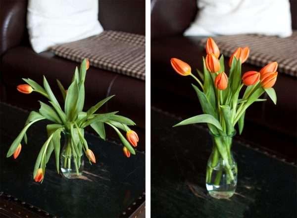 tulpen pflege was tun wenn tulpen schlapp sind und ihre. Black Bedroom Furniture Sets. Home Design Ideas