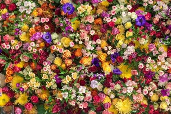 Wand gesteckt mit frischen Blumen_Mimi Eden_Anemonen_Rosen