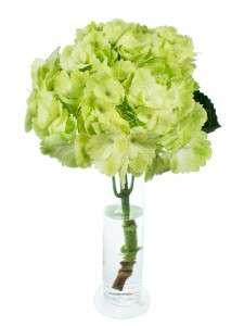 Hortensien Magical Blossom