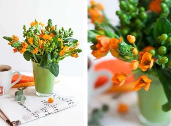 Oranger Gärtnerschreck mit grünem Hypericum