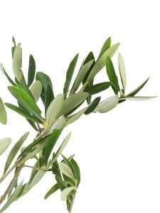 Olivengrün