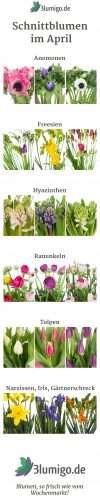 April Saison Schnittblumen