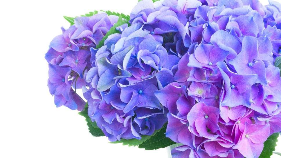 Welche Blumen Bl Hen Im September blumen im juni der juni in blumen tastesheriff welche blumen bl hen im juni haus garten